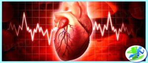 Сердце и пульс