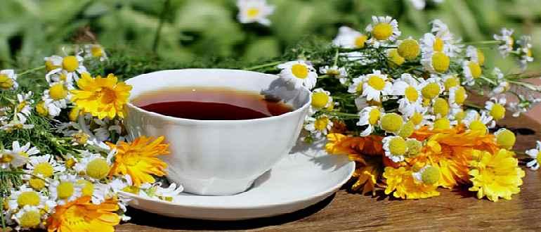 Чай из цветков ромашки и ноготков