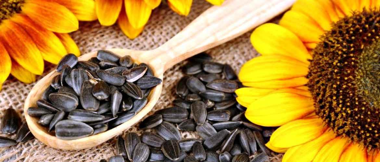 Чем полезны подсолнечные семечки для женщин