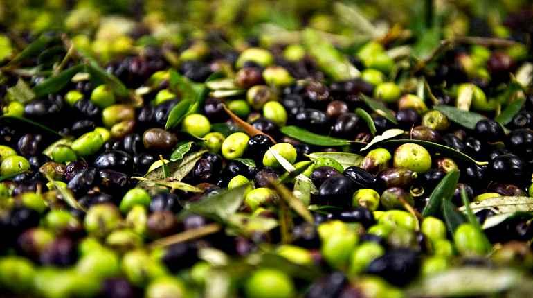 Много маслин и оливок