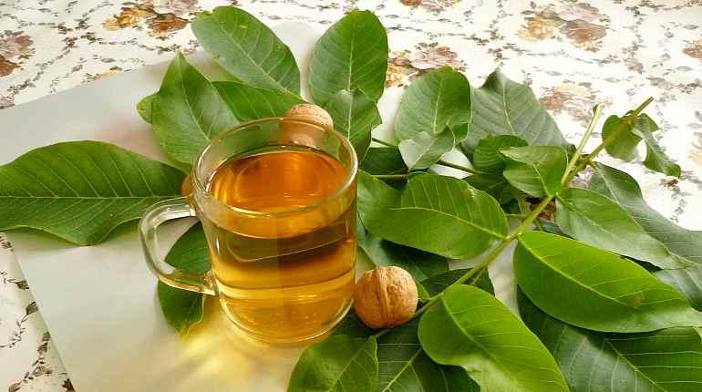 Чай из листьев грецкого ореха