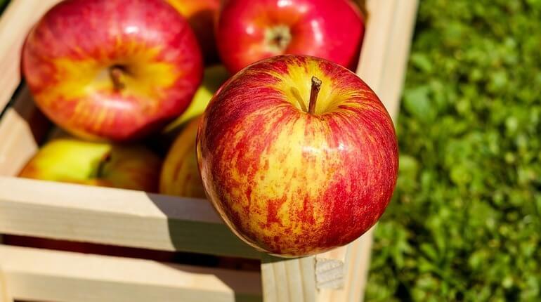 Яблоки для чистки почек