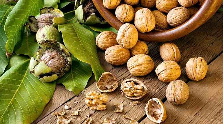 Спелые грецкие орешки