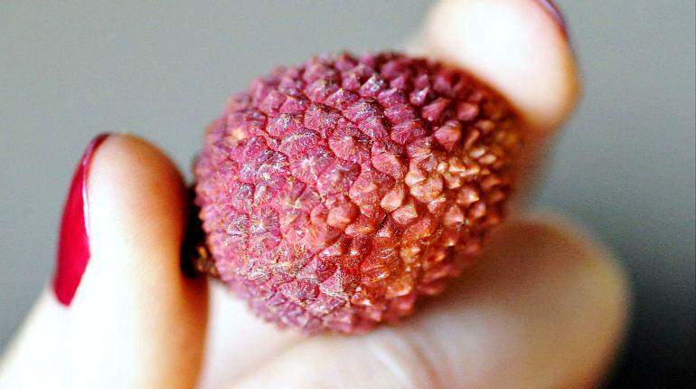 Плод личи