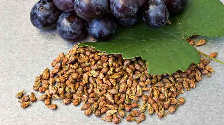 Семена черного винограда
