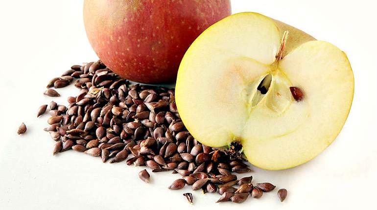 Заготовка яблочных косточек