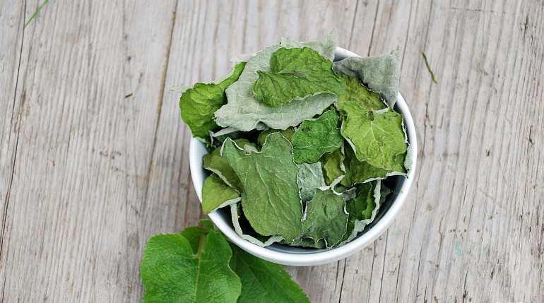 Приготовление настойки из листьев лопуха