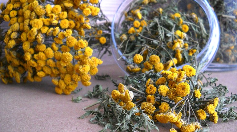 Цветки растения канупер