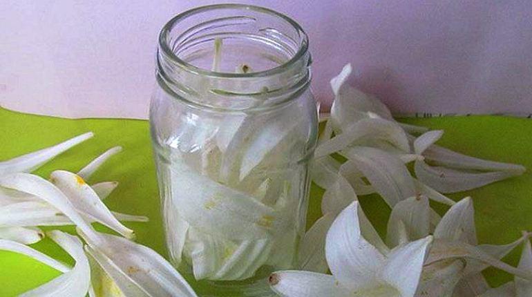 Приготовление настойки из лепестков лилии