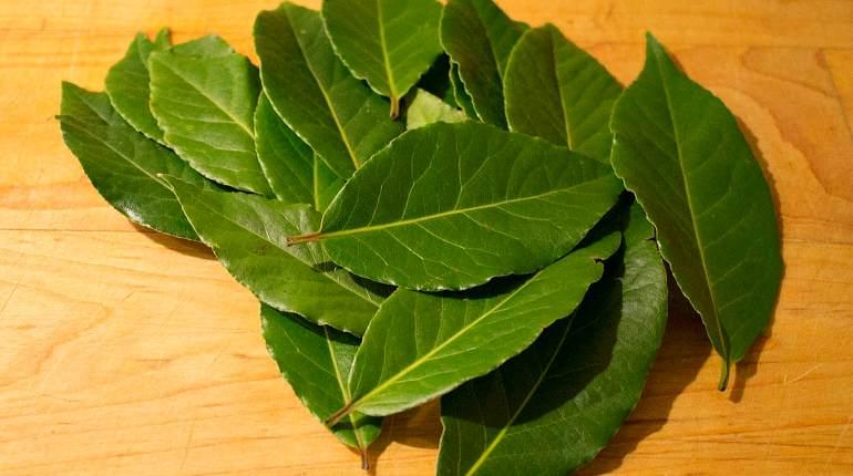 Приготовление чая из лаврового листа