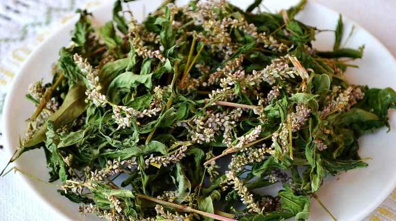 Сушка почечуйной травы