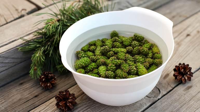 Зеленые еловые шишки