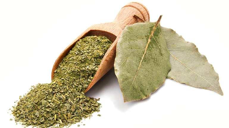 Сушеное сырье из листьев лавра