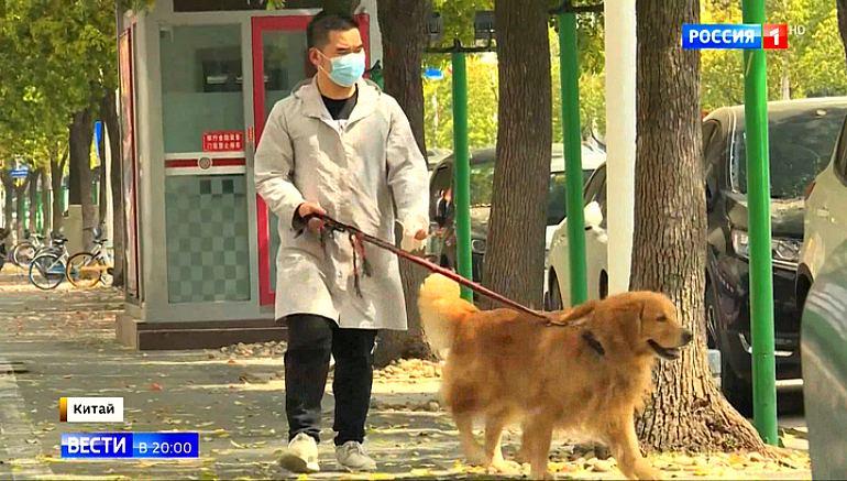 Заражение вирусом от животного