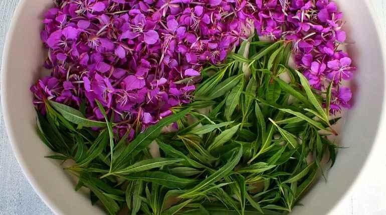 Цветки и трава кипрея