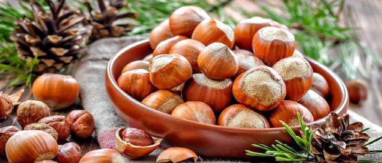 Польза и вред для организма ореха Фундук