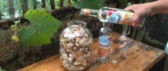 Настойка из грибов веселки и водки