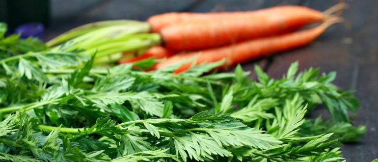 Морковь и ее зелень